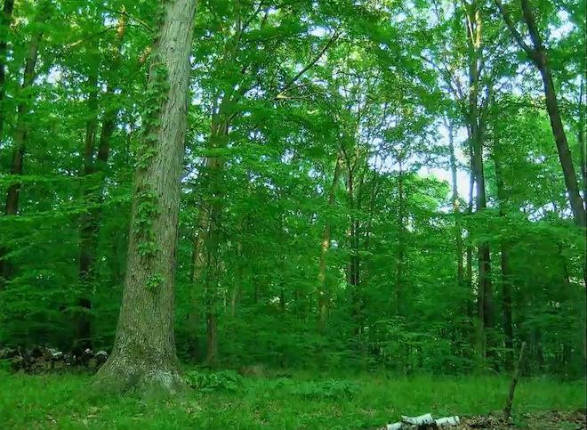foresttimelapse