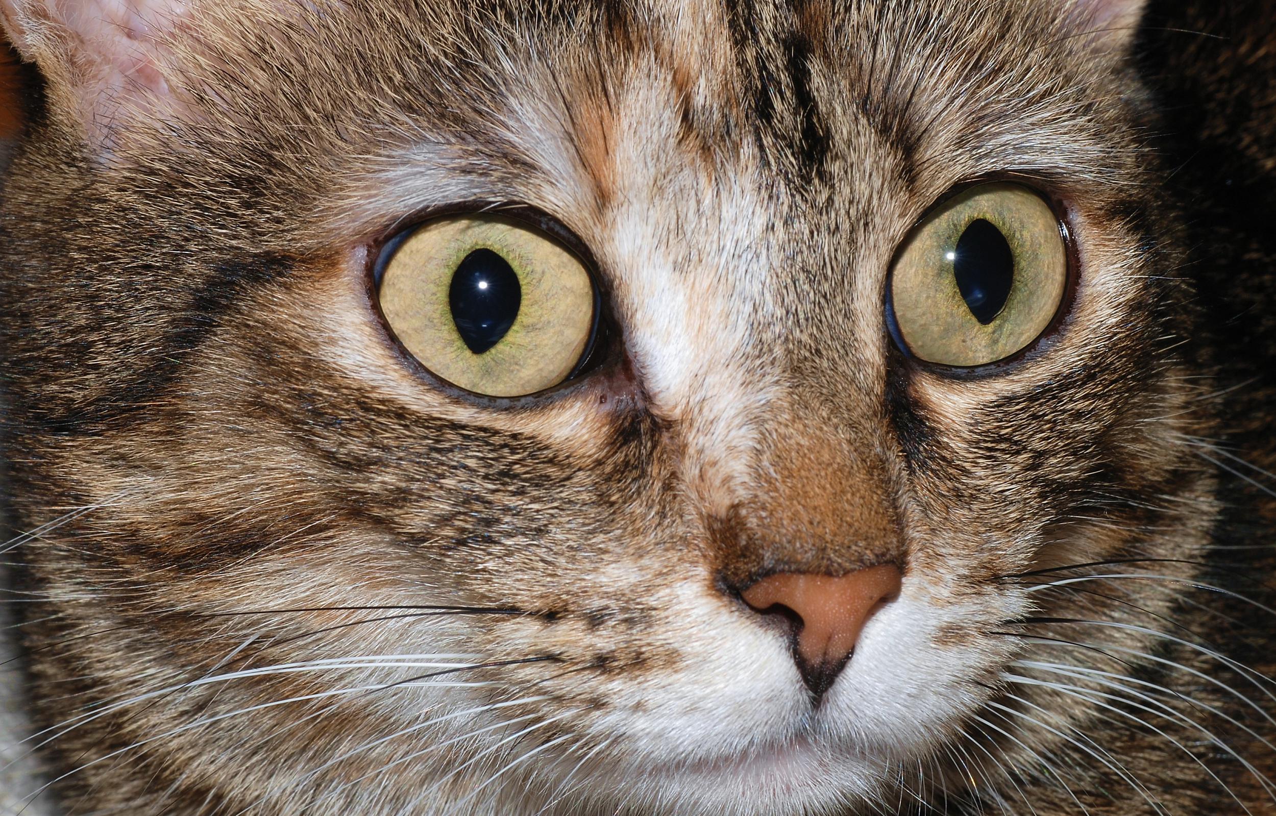 Iris Cats Protection