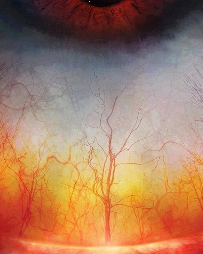 eye-forest