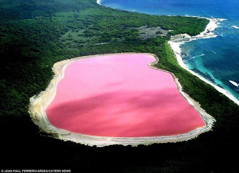 lake-hillier-pink-lake-in-australia-1