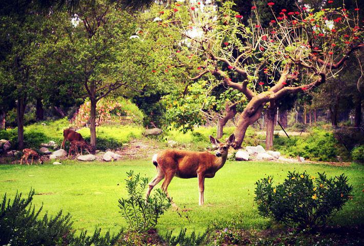 bambi-jpl
