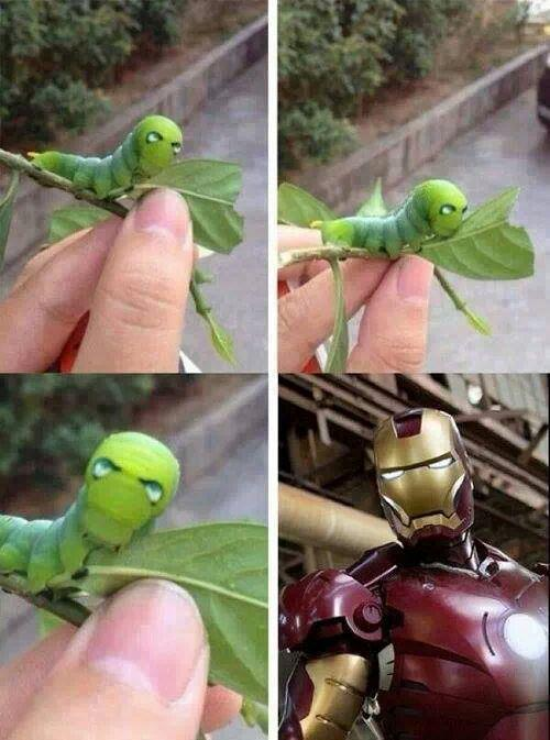iron-bug