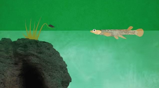 eyefish